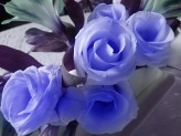 A garland of blue winter roses